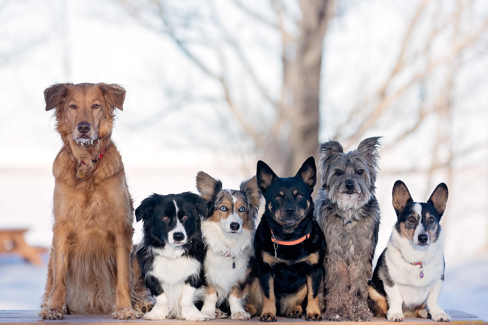 смотреть картинки все собаки смогла опередить ближайших